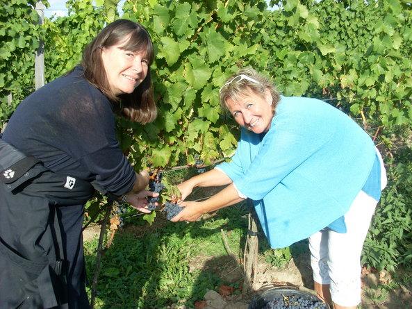 Bio-Wein: 70 Prozent der gesamten Öko-Rebfläche Deutschlands