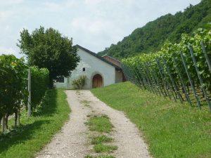 Baierwein