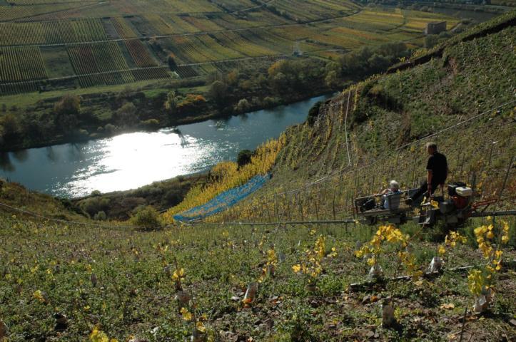 Mosel Wein Steillage