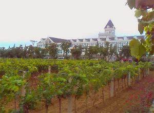 China Weinproduktion: Kritik wegen ungenauer Meldung