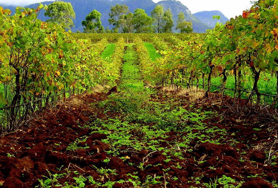 Weinbau Australien