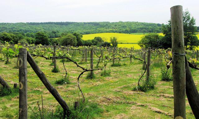 Weinbau England