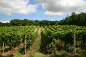Weinbau in England
