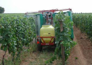 Pestizide im Wein – ein Dauerbrenner