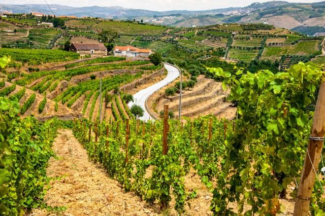 Weinbau in Portugal