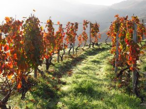 Saúde! Wein und Weinbau in Portugal