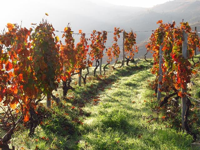 Wein Portugal Douro