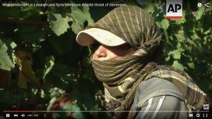 Der gefährlichste Wein der Welt: Weinbau in Syrien