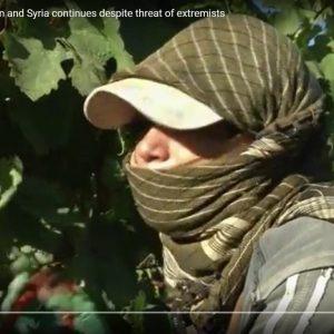 Weinbau in Syrien