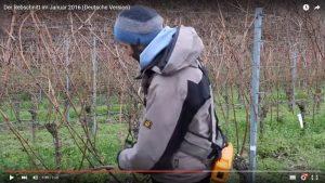 Was macht ein Weingut eigentlich im Winter?