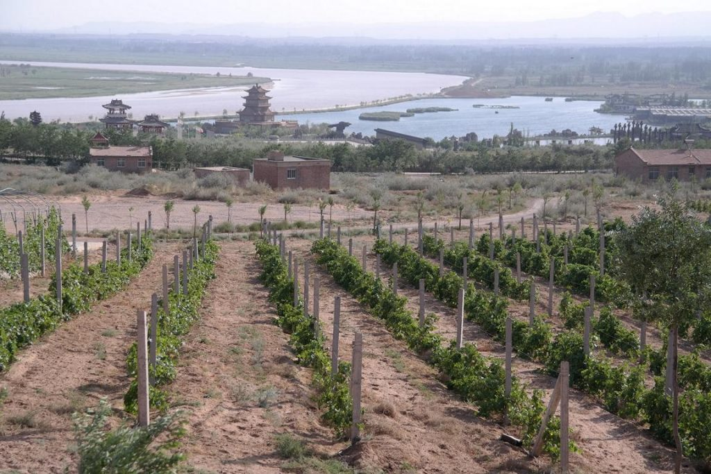 Ningxia Wein