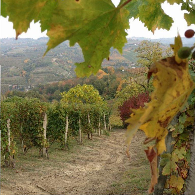 Italien Wein Piemont