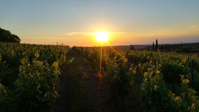 Barone Ricasoli Wein