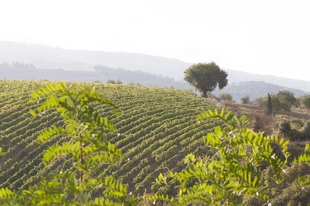 San Felice Wein