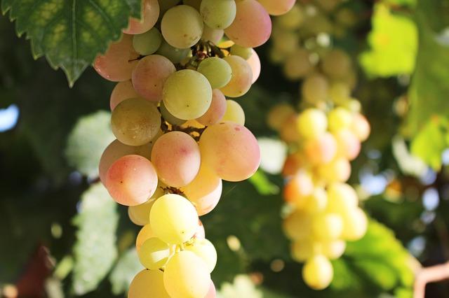 Wein Demeter