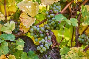 Fontodi Wein