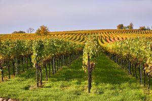 Frescobaldi Wein