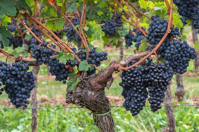 Grattamacco Wein