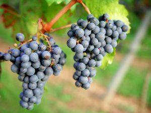 Weinprobe: Malbec Mendoza von Achaval Ferrer