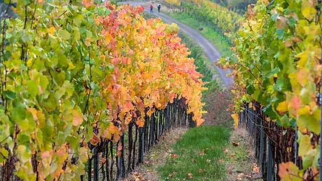 Weinprobe: Vino Nobile di Montepulciano 2013 - WeinWonne