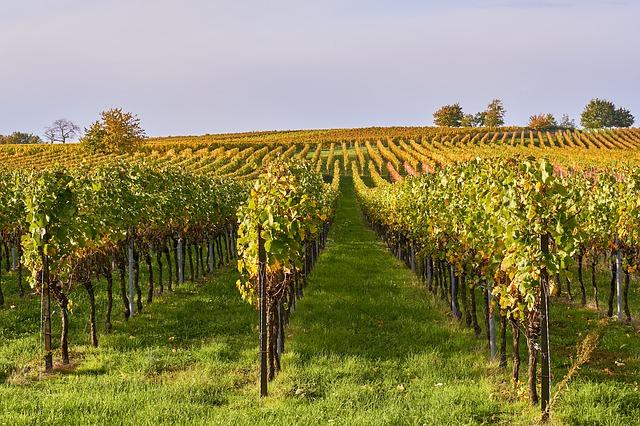 Weingut Ornellaia