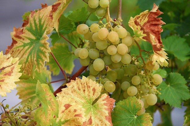 Woher kommen Tannine im Wein