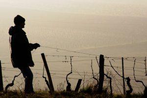 Wir Winzer – Make German Wine great again